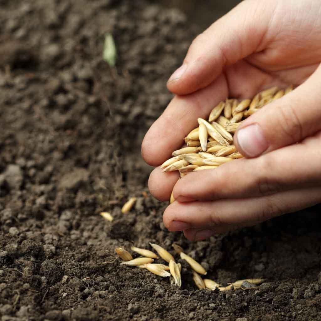 Семена были рассеяны