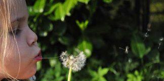 Чудо-растения