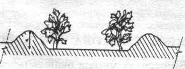 Овощеводство на узких грядах